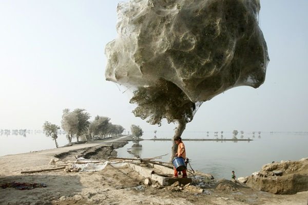 spider-trees-pakistan01